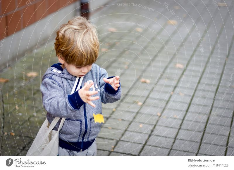 Human being Child Leaf Joy Autumn Natural Movement Boy (child) Playing Small Happy Masculine Infancy Authentic Observe Curiosity