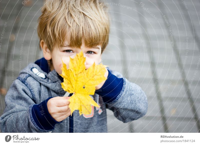 autumn portrait Human being Masculine Child Toddler Boy (child) Infancy Face 1 1 - 3 years Autumn Leaf Sweater Observe Discover To hold on Playing Authentic