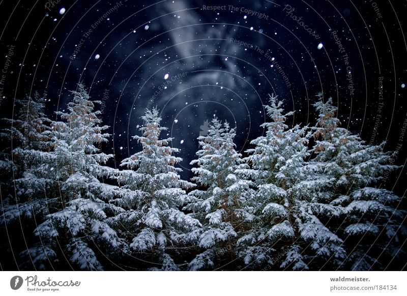 Spirit of this year's Christmas night Tree Forest Creepy Snowfall Deserted Night shot Winter forest Enchanted forest Dark Winter mood Colour photo Exterior shot