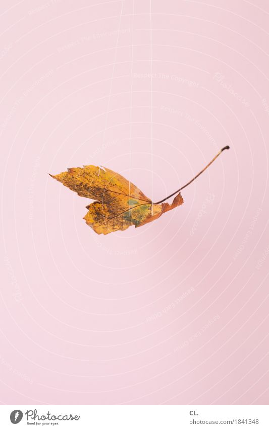 Nature Leaf Environment Autumn Exceptional Pink Leisure and hobbies Weather Esthetic Creativity Idea Climate String Inspiration Hang Handicraft