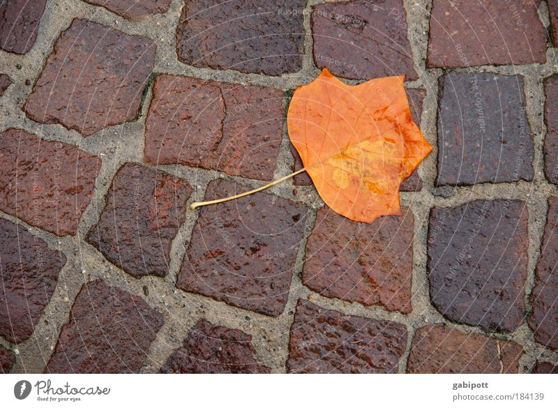 Nature Water Tree Plant Leaf Loneliness Street Autumn Sadness Rain Brown Environment Wet Lie Transience Gale