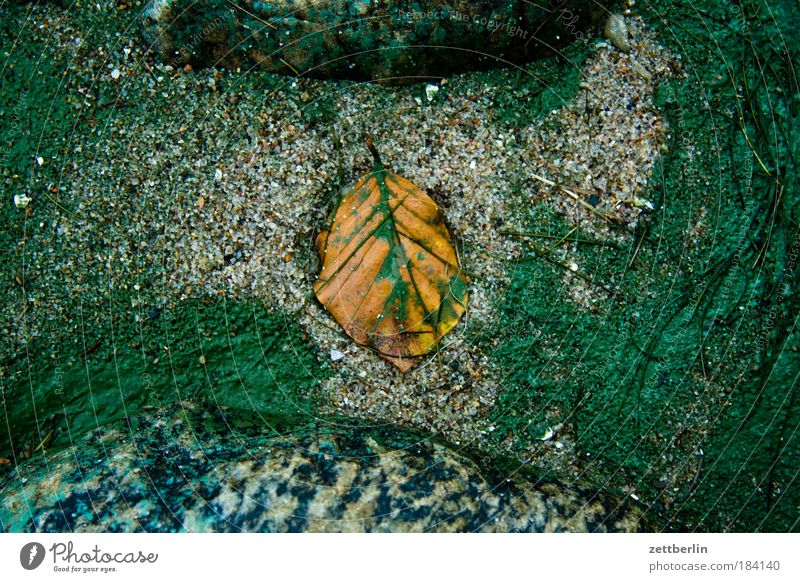 Leaf (on the beach) Autumn Autumn leaves Ocean Beach Sand Colour Dye Algae Pigmented mole Colorant Stone Structures and shapes