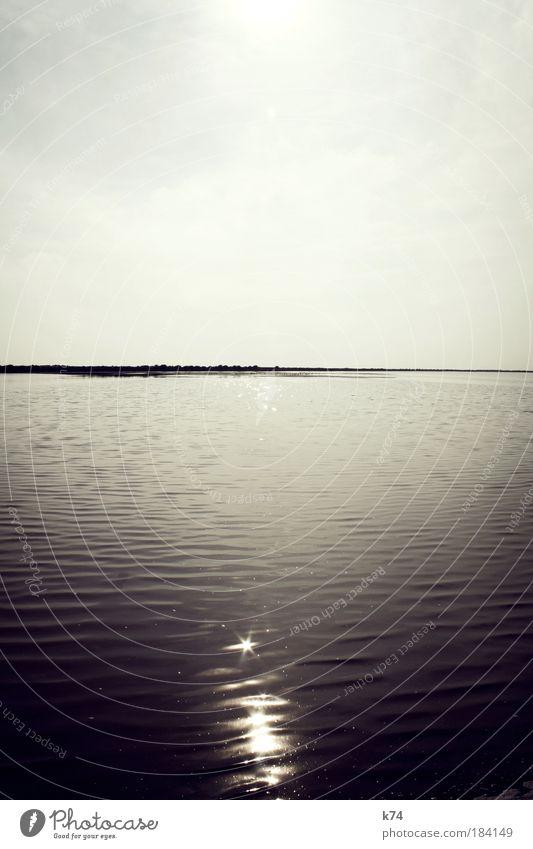 Delta de l'Ebre Flamingo Water Ocean Light light points reflection Horizon Sun Back-light