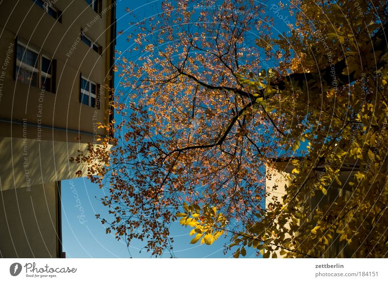 Sky Tree Sun Leaf House (Residential Structure) Autumn Wall (barrier) Building Bright Gold Seasons Backyard Dazzle Tenant Neighbor Autumn leaves