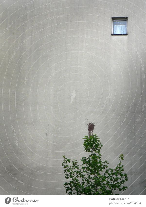 City Tree House (Residential Structure) Wall (building) Window Freedom Environment Gray Wall (barrier) Sadness Building Dirty Tall Gloomy Drape Oppressive