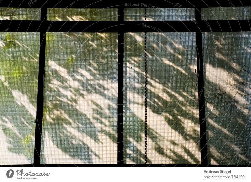 Nature Old Tree Plant Leaf House (Residential Structure) Window Environment Architecture Jump Building Esthetic Broken Authentic Gloomy Industry