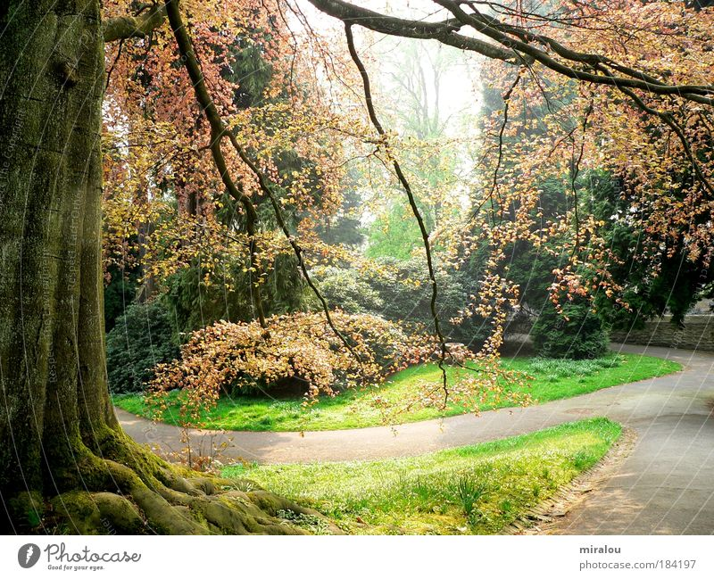 Nature Tree Green Plant Calm Forest Life Relaxation Meadow Spring Dream Lanes & trails Park Landscape Power Environment