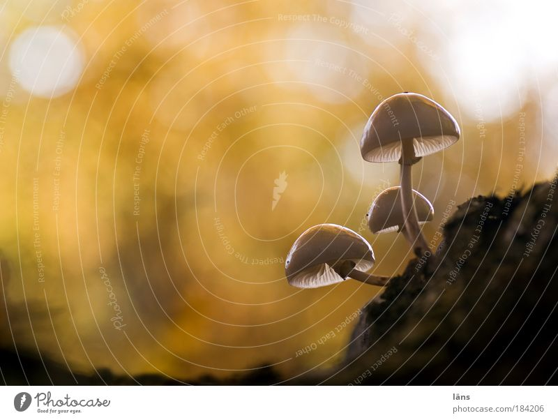 Nature Plant Environment Landscape Autumn Glittering Mushroom Deciduous forest