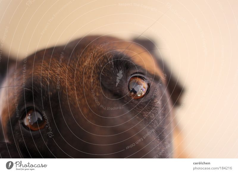 """Look me in the eye... Colour photo Interior shot Shallow depth of field Bird's-eye view Animal portrait Looking into the camera Pet Dog 1 Communicate Sadness"