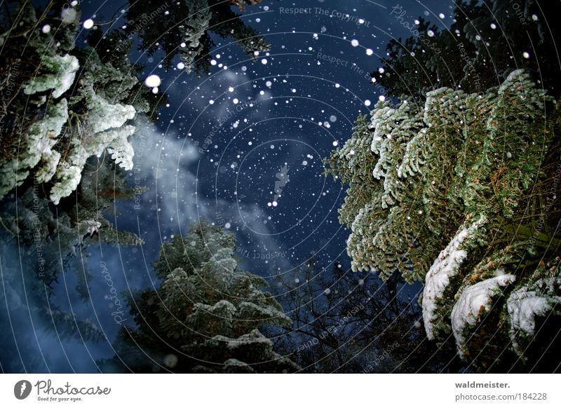 Spirit of the future Christmas Night sky Winter Fog Ice Frost Snowfall Tree Forest Creepy Emotions Romance Calm Peace Mysterious Cold Surrealism
