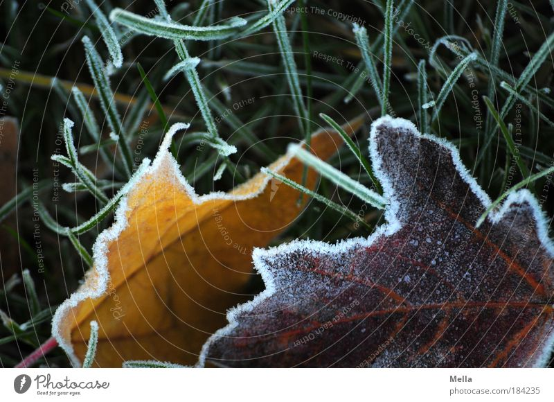 It's cold Colour photo Multicoloured Exterior shot Deserted Day Environment Nature Plant Earth Winter Climate Ice Frost Leaf Meadow Freeze Lie Cold Moody Calm