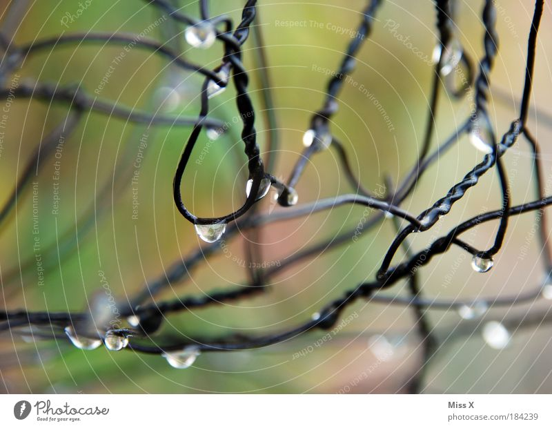 Water Cold Meadow Park Rain Metal Glittering Fog Weather Environment Drops of water Wet Fresh Climate Fence Wire