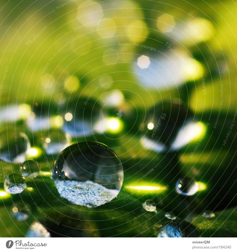 Macro (Extreme close-up) Nature Water Beautiful Green Sunlight Calm Life Relaxation Abstract Rain Light Earth Pattern Healthy Small