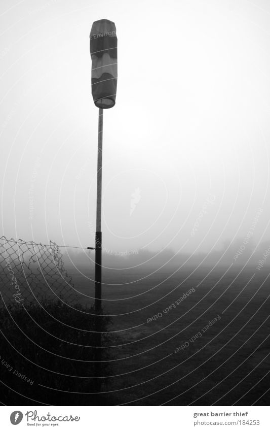 Air out Black & white photo Exterior shot Close-up Day Contrast Sunlight Sunbeam Environment Nature Landscape Sky Autumn Climate Weather Wind Fog Ice Frost Wait