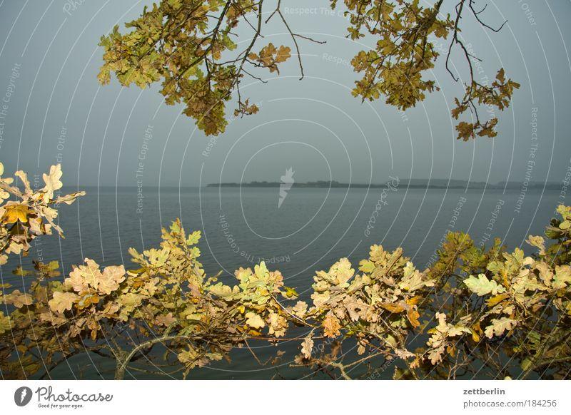 New Reddevitz Water Ocean Baltic Sea Coast Vacation & Travel Leisure and hobbies Mecklenburg-Western Pomerania Island Far-off places Freedom Horizon Longing