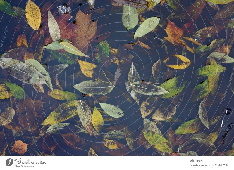 Cloudy autumn Colour photo Exterior shot Close-up Pattern Structures and shapes Deserted Day Bird's-eye view Environment Nature Plant Water Weather Bad weather