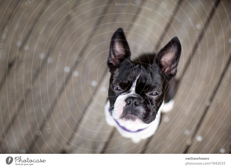 Dog Animal Joy Funny Wood Moody Sit Cute Observe Cool (slang) Pet Self-confident Animal face Brash Expectation Willpower