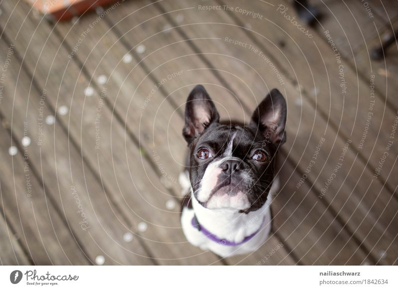 Dog Animal Joy Baby animal Funny Wood Happy Contentment Happiness Study Wait Cute Observe Friendliness Curiosity Pet