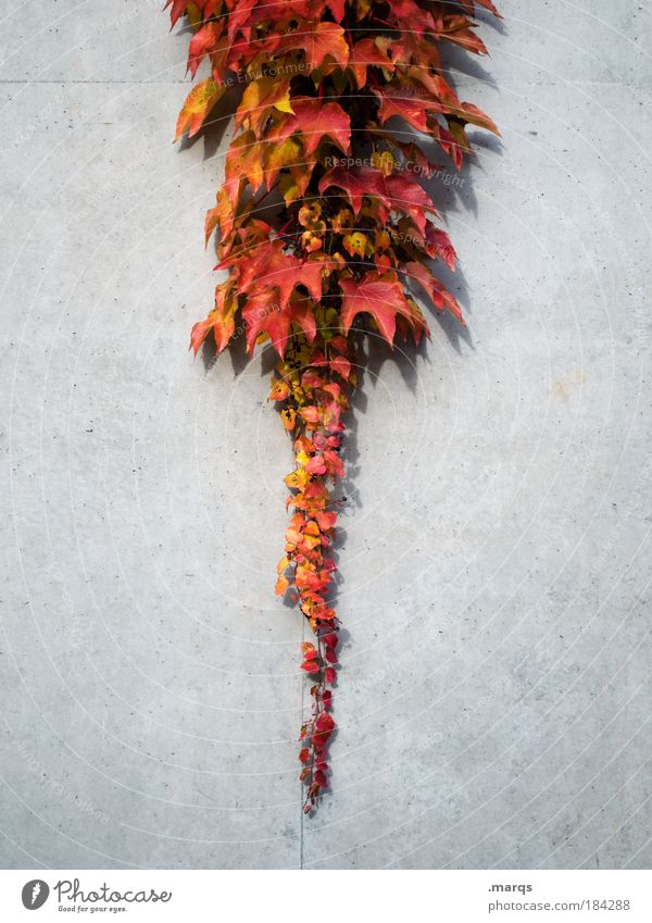 Nature Plant Red Leaf Colour Autumn Simple Point Illuminate Symmetry Central Sustainability Willpower Faded