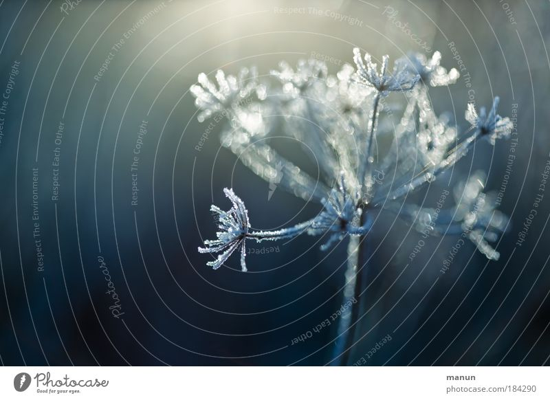 hoarfrost Harmonious Senses Relaxation Calm Gardening Nature Plant Drops of water Winter Ice Frost Snow Bushes Wild plant Hoar frost Park Freeze Glittering