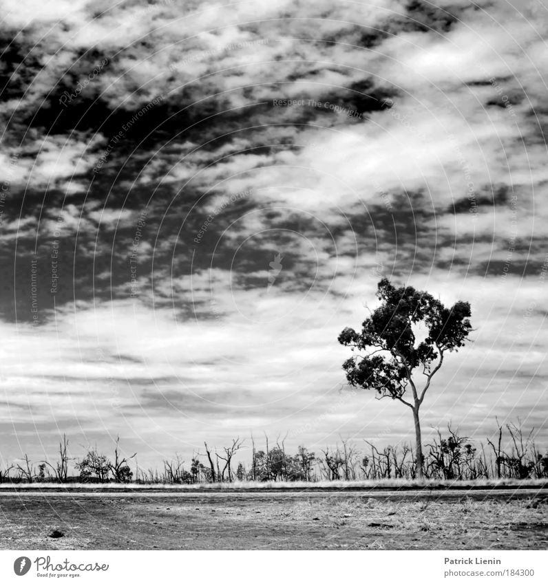 burned trees Environment Landscape Air Sky Clouds Climate Weather Drought Tree Vacation & Travel Australia Street Loneliness In transit Freedom Oppressive Line
