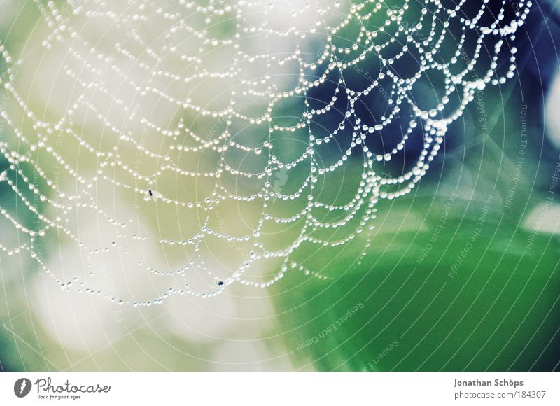 Nature Blue Green White Animal Environment Glittering Drops of water Network Thin Dew Trap Smart Spider Spider's web