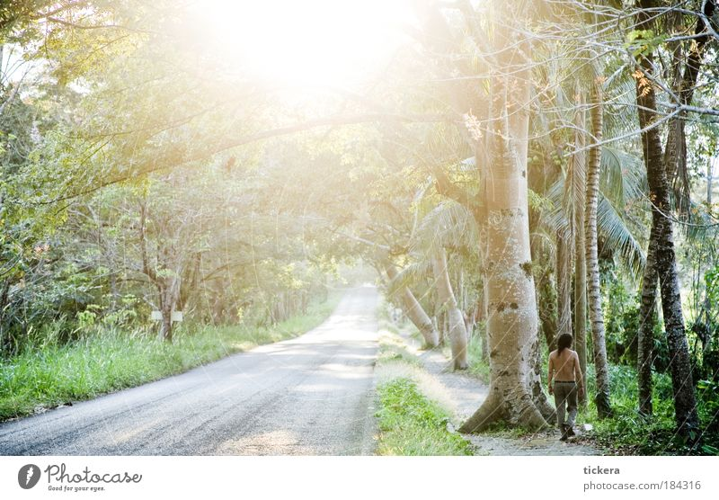 lush road Colour photo Exterior shot Copy Space left Copy Space bottom Day Light Sunlight Sunbeam Back-light Central perspective Long shot Panorama (View)