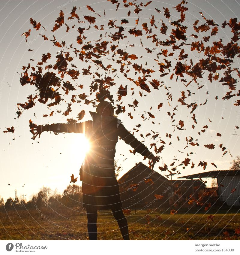 Woman Human being Nature Youth (Young adults) Red Joy Leaf Adults Yellow Autumn Feminine Environment Landscape Sunbeam Happy Legs