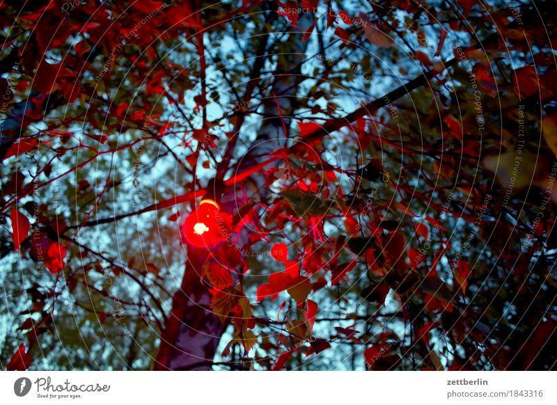 autumn party Evening Tree Branch Twig Avenue Trip Destination Tavern Beer garden Dark Garden Garden festival Gastronomy Mysterious Deserted Fairy lights Night