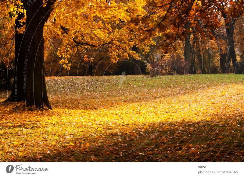 Nature Beautiful Tree Landscape Calm Leaf Yellow Environment Emotions Autumn Time Park Gold Esthetic Fantastic Seasons