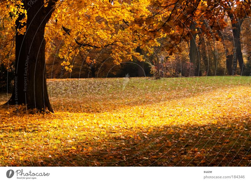 parking strips Environment Nature Landscape Autumn Tree Leaf Esthetic Fantastic Beautiful Yellow Gold Emotions Time Autumn leaves Autumnal Seasons