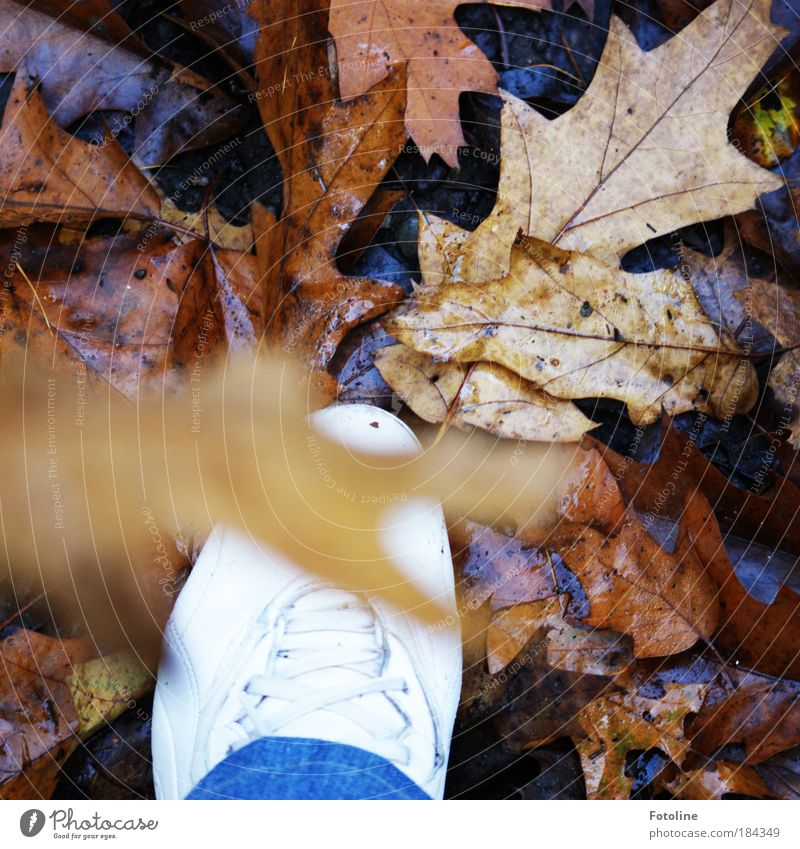 Human being Nature Tree Plant Leaf Environment Autumn Movement Feet Earth Weather Going Walking Autumn leaves Autumnal Autumnal colours