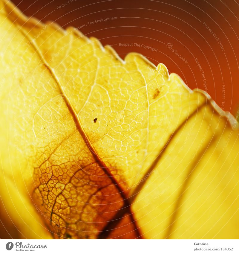 Nature Beautiful Tree Plant Sun Leaf Environment Yellow Warmth Autumn Bright Park Brown Weather Gold Natural