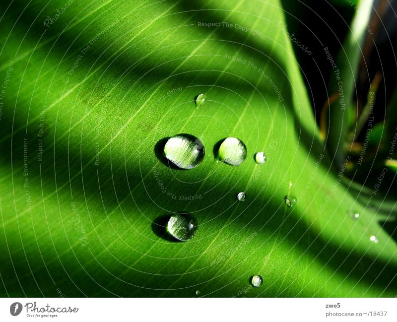 Water Green Rain Drops of water Banana