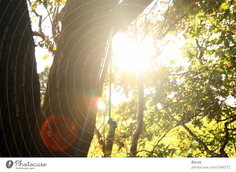 Nature Tree Sun Leaf Forest Relaxation Autumn Garden Landscape Air Environment Back-light Climbing Reflection To hold on Blossoming
