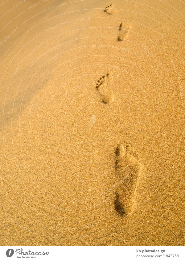 Footprint at the beach in Sri Lanka Relaxation Vacation & Travel Beach Sand sunny stressed footprint footprints barefoot time-out sight sea sky landscape