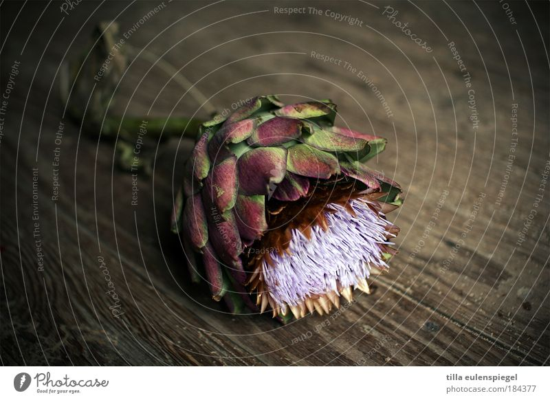 Nature Plant Wood Vegetable Floor covering Wooden floor Edible Biological Artichoke