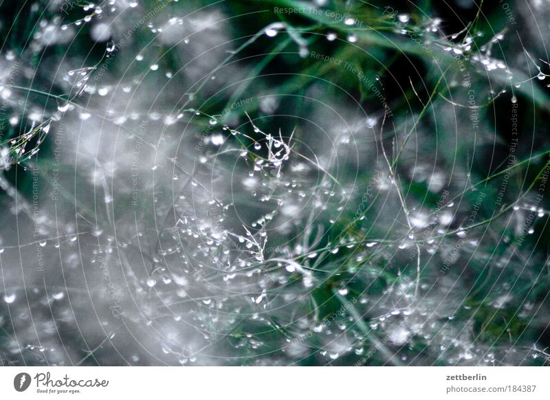 trickle Dew Water Drops of water Rain Bushes Hedge Tendril Plant Screening Bird's colony Autumn Structures and shapes Arrangement Wet Damp Drizzle Weather