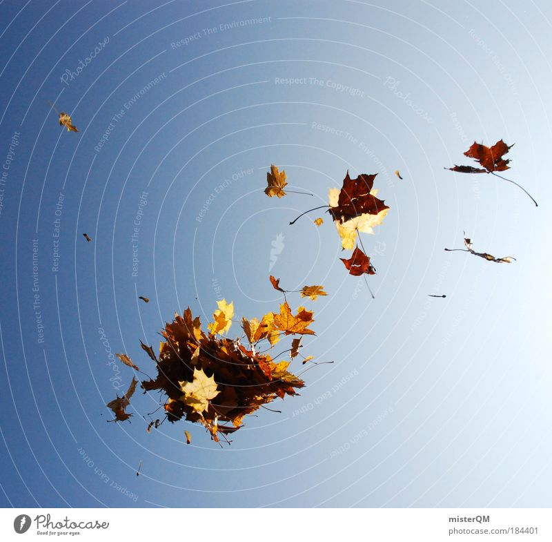 Nature Joy Leaf Wind Autumn Life Weather Brown Flying Esthetic Exceptional To go for a walk Many End Creativity Universe