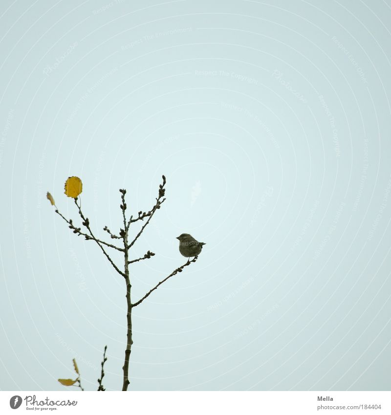 sparrow autumn Environment Nature Plant Animal Air Sky Autumn Winter Tree Leaf Wild animal Bird Sparrow 1 Crouch Sit Small Natural Cute Gray Moody Calm