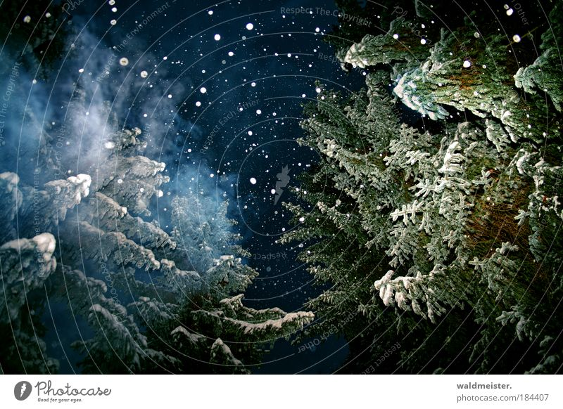 Marley's Spirit Night sky Winter Snow Snowfall Tree Forest Relaxation Exceptional Creepy Blue Green White Emotions Anticipation Calm Universe Ghosts & Spectres