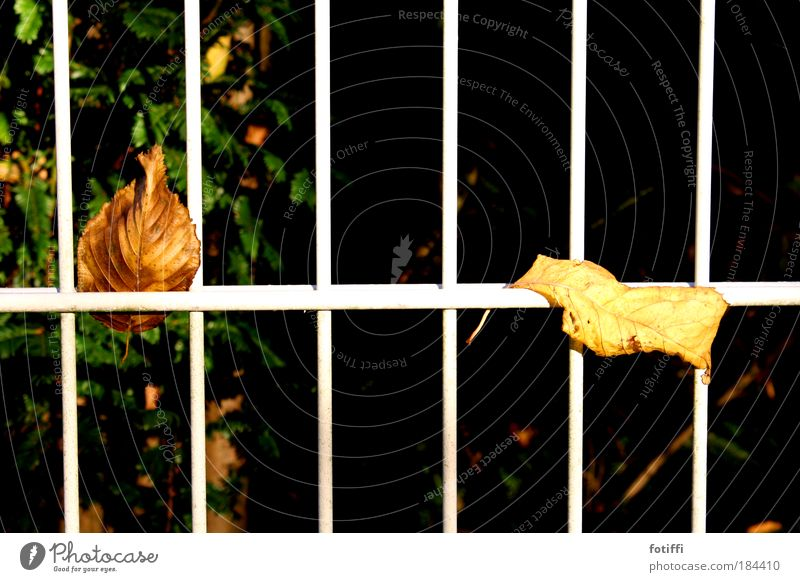 Nature Calm Leaf Relaxation Autumn Garden Together Observe Curiosity Dry Fence Grating Closing time Goof off