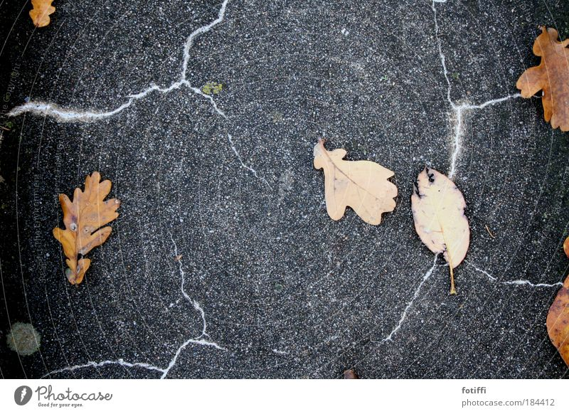 Nature Leaf Autumn Orange Concrete Threat Wild Lightning Thunder and lightning Storm Chaos Haste Romp