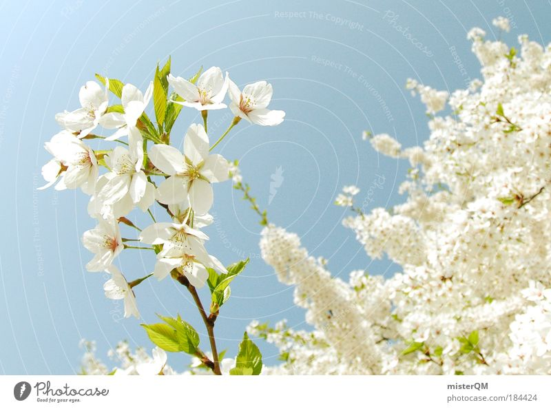 Nature Beautiful White Fruit Life Blossom Spring Freedom Dream Park Landscape Macro (Extreme close-up) Earth Power Healthy Weather