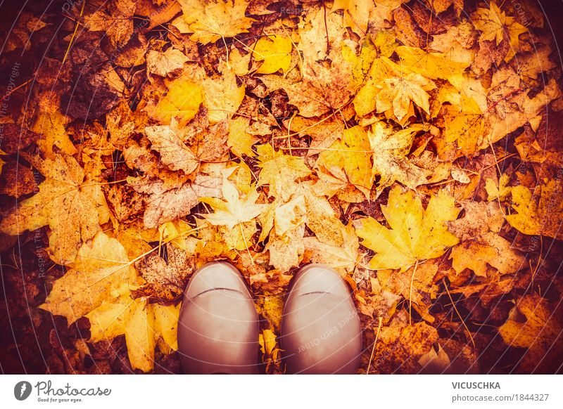Rubber boots on autumn leaves Lifestyle Design Vacation & Travel Garden Human being Feet Nature Autumn Beautiful weather Leaf Park Forest Yellow