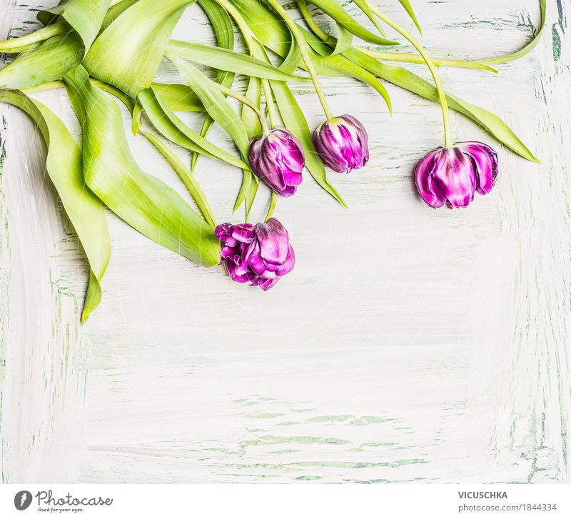 Pretty tulips on white background Style Design Living or residing Garden Decoration Valentine's Day Mother's Day Nature Plant Spring Flower Tulip Bouquet