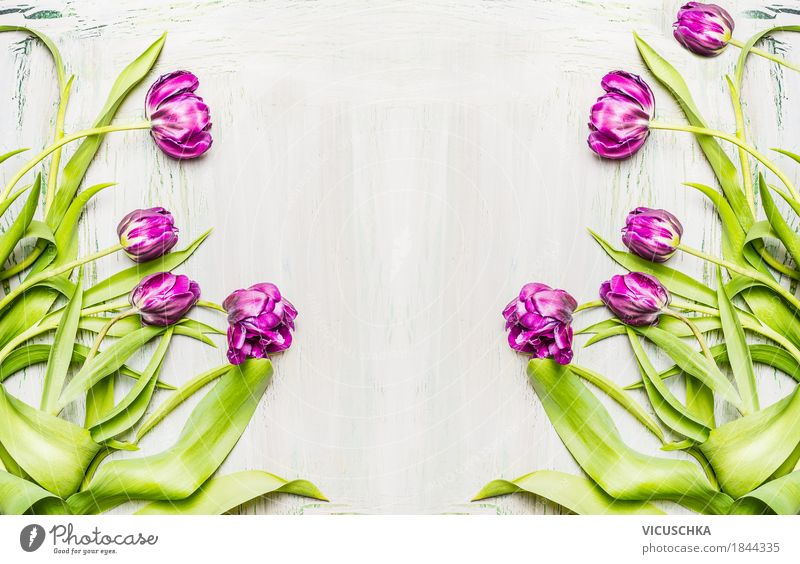 Background with purple tulips Style Design Joy Decoration Nature Plant Spring Flower Tulip Leaf Blossom Bouquet Blossoming Love Yellow Violet Pink
