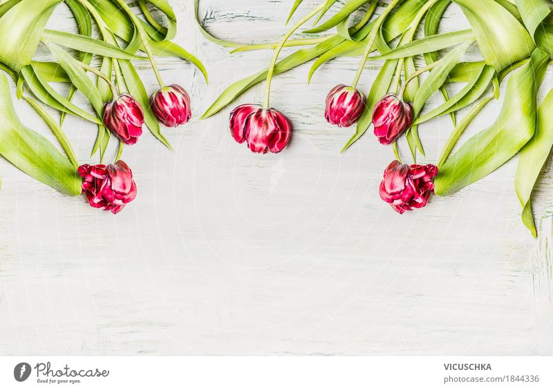 Tulips on white wood background Style Design Decoration Feasts & Celebrations Mother's Day Birthday Nature Plant Spring Leaf Blossom Bouquet Blossoming Love