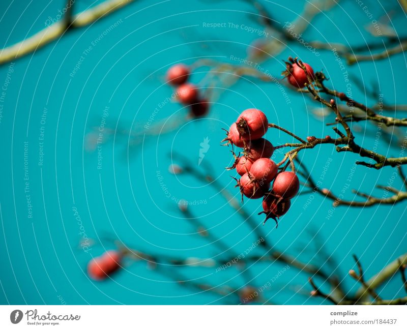 BirdPerspective Colour photo Copy Space left Copy Space bottom Day Bird's-eye view Nutrition Nature Sky Cloudless sky Autumn Winter Tree Bushes Blossom Exotic