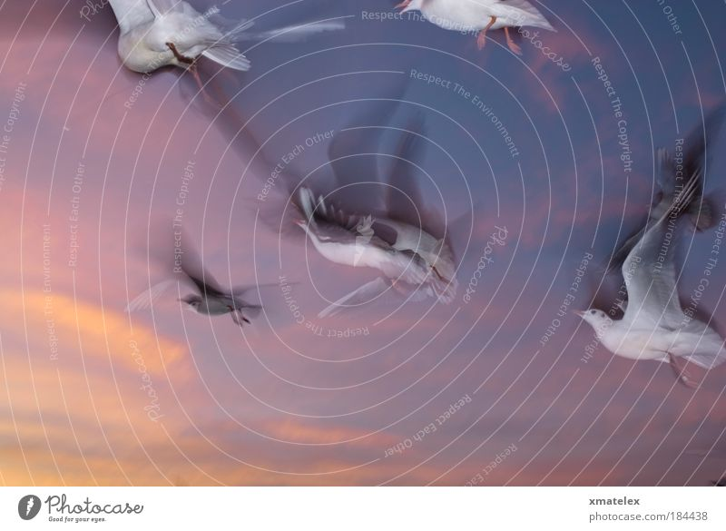 Sky Life Bird Flying Group of animals Colour photo Motion blur Surrealism Ease